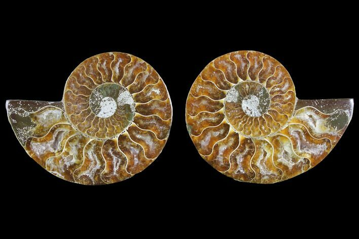 "3.1"" Agate Replaced Ammonite Fossil (Pair) - Madagascar"