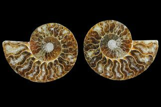 "Buy 3.3"" Agate Replaced Ammonite Fossil (Pair) - Madagascar - #145828"