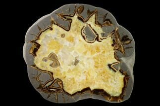 Septarian - Fossils For Sale - #150150
