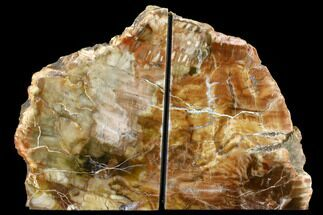 "5"" Tall, Colorful Petrified Wood Bookends - Madagascar For Sale, #152429"