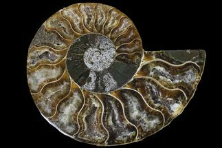 "3.1"" Cut & Polished Ammonite Fossil (Half) - Agate Replaced For Sale, #146213"