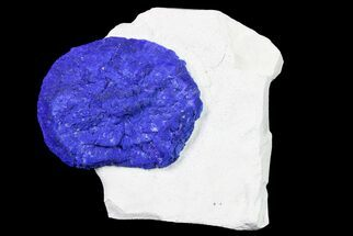 "Buy 2.2"" Blue Azurite Sun on Siltstone - Australia - #155542"