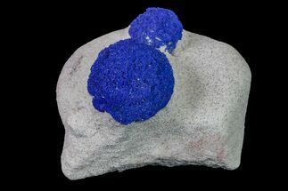Two Vibrant, Blue Azurite Suns on Siltstone - Australia For Sale, #155648