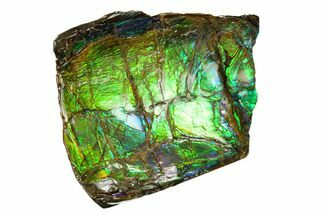 "2.4"" Iridescent Ammolite (Fossil Ammonite Shell) - Alberta, Canada For Sale, #156845"