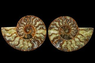 "Buy 5.25"" Agate Replaced Ammonite Fossil (Pair) - Madagascar - #158317"