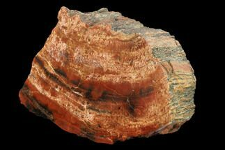 "Buy 8"" Polished, Red/Black Petrified Wood (Araucarioxylon) - Arizona - #159718"