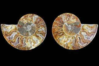 "3.1"" Agate Replaced Ammonite Fossil (Pair) - Madagascar For Sale, #145919"