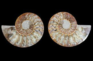 "4.25"" Agatized Ammonite Fossil (Pair) - Crystal Filled Chambers For Sale, #148028"