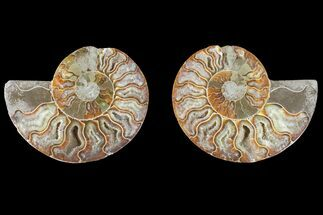 "4"" Agate Replaced Ammonite Fossil (Pair) - Madagascar For Sale, #150923"