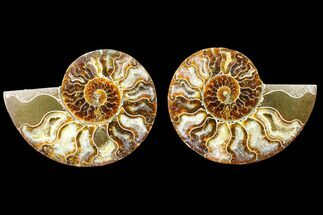 "4.4"" Agate Replaced Ammonite Fossil (Pair) - Madagascar For Sale, #150932"