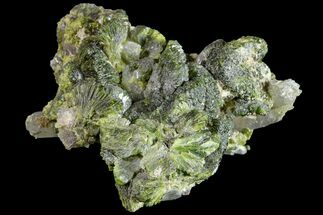 "Buy 1.5"" Lustrous Epidote with Quartz Crystals - Morocco - #161140"