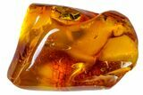 Detailed Fossil Wasp (Hymenoptera) In Baltic Amber - #163515-1