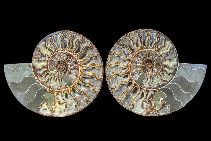"9.4"" Cut & Polished Ammonite Fossil (Pair) - Agate Replaced"