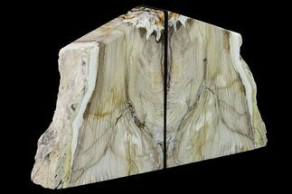 "6.5"" Petrified Wood Bookends - McDermitt, Oregon For Sale, #166115"