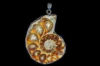 "1.75"" Fossil Ammonite Pendant - 110 Million Years Old For Sale, #166151"