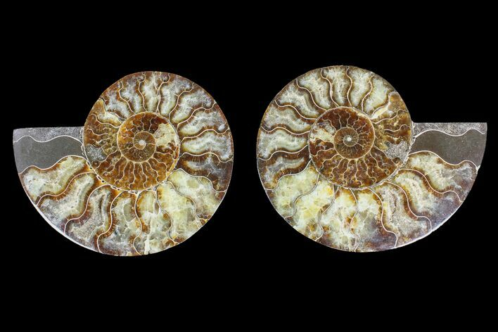 "6.5"" Agate Replaced Ammonite Fossil (Pair) - Madagascar"