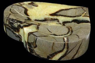 Septarian - Fossils For Sale - #157425