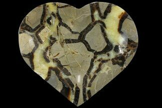Septarian - Fossils For Sale - #157437