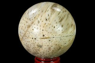 "Buy 2.55"" Polished Petrified Palmwood (Palmoxylon) Sphere  - #167623"