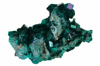 "1.5"" Gemmy Dioptase Crystal Cluster - Renéville Mine, Congo For Sale, #168638"