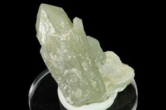 "Buy 2.3"" Sage-Green Quartz Crystal Cluster - Mongolia - #169891"