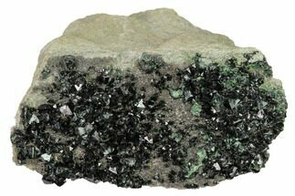 "2.5"" Deep-Green Libethenite Crystal Cluster  For Sale, #169820"