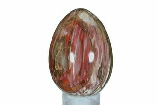 "Buy 6.6"" Colorful, Polished Petrified Wood Egg - Madagascar - #172534"