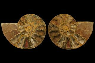 "10"" Cut & Polished Ammonite Fossil (Pair) - Jurassic For Sale, #172448"