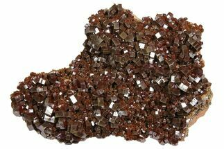 "6.5"" Vanadinite Cluster From Morocco - Epic Plate Of Large Crystals! For Sale, #84452"