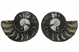 "3.1"" Cut/Polished Ammonite Fossil (Pair) - Unusual Black Color For Sale, #165665"