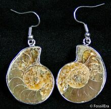 Ammonite Earrings For Sale, #2606