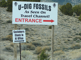 Trip Report: U-Dig Trilobite Quarry – March, 2014