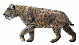 California State Fossil - Saber-Tooth Tiger (Smilodon californicus)