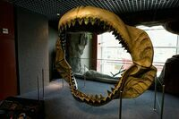 Reconstructed jaws on display at the National Aquarium in Baltimore.