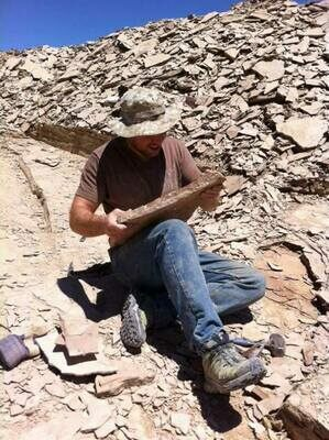 Collecting the interbedded shales and limestones of the Marjum Formation