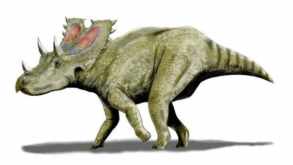 Artist reconstruction of Agujaceratops by Nobu Tamura