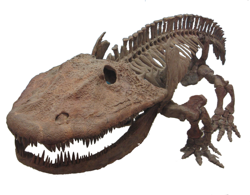 Cast of a fossil skeleton of Eryops