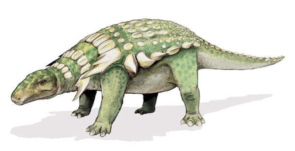 An artists reconstruction of an Ankylosaur.  Image Public Domain by Mariana Ruiz