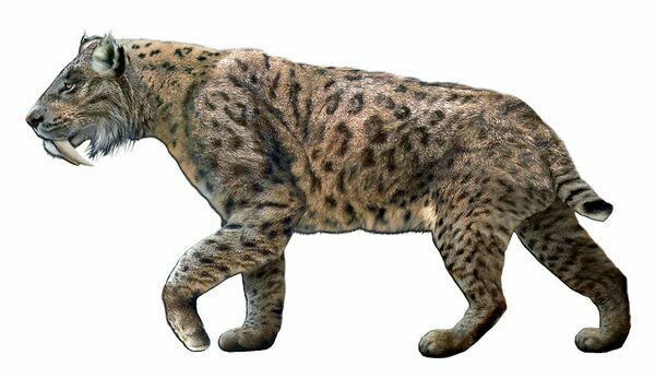 An artists reconstruction of Smilodon  By Dantheman9758 Creative Commons License
