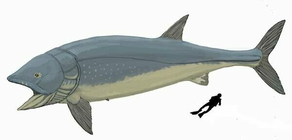 Leedsichthys problematicus was estimate to have grown up to 50 feet in length.