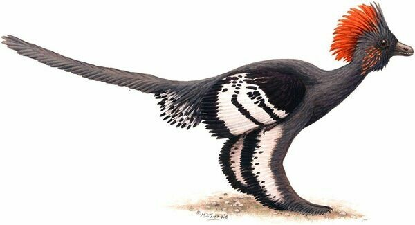 Reconstruction of the plumage color of the Jurassic dinosaur A. huxleyi.  Color plate by M. A. DiGiorgio / Figure 4 from Li et al. 2010