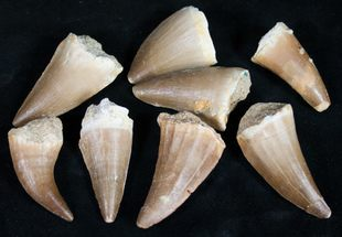 Bulk Fossils For Sale