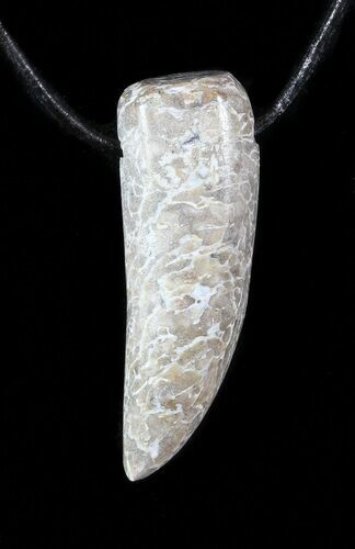 Polished Dinosaur Bone Necklaces - Claw Shape - Photo 1
