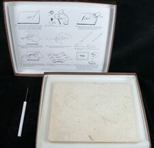 Prepare Your Own Fossil Fish Kit - Grade B
