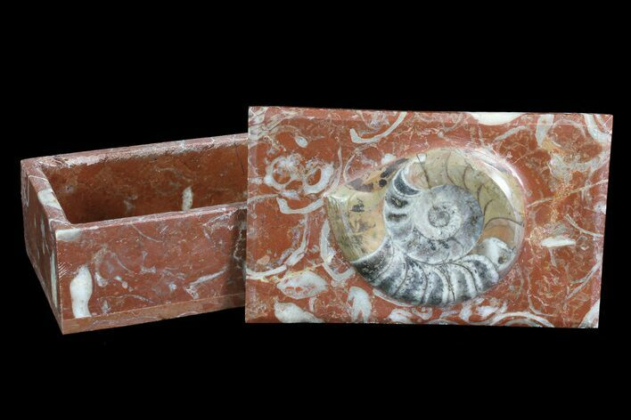 "5"" Fossil Goniatite Jewelry Boxes - Photo 1"