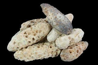 Wholesale: Morocco Fossil Seed Cones - Lot Of 10 Pieces