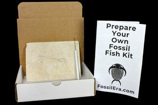 Prepare Your Own Fossil Fish Kit - Cockerellites (Priscacara)