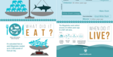 "24x36"" Megalodon Infographic Poster (Matte) - Photo 4"
