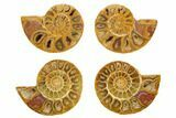 "1.75 to 2"" Orange, Cut & Polished Ammonite Fossils - Jurassic - Photo 3"