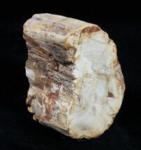 Petrified Wood Limb Section - Madagascar For Sale, #3353